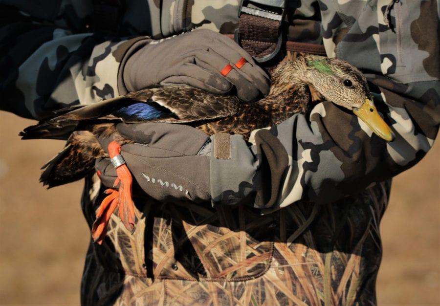 Duck.banding.MiddleCreek.3.12.19.derekstoner.4111
