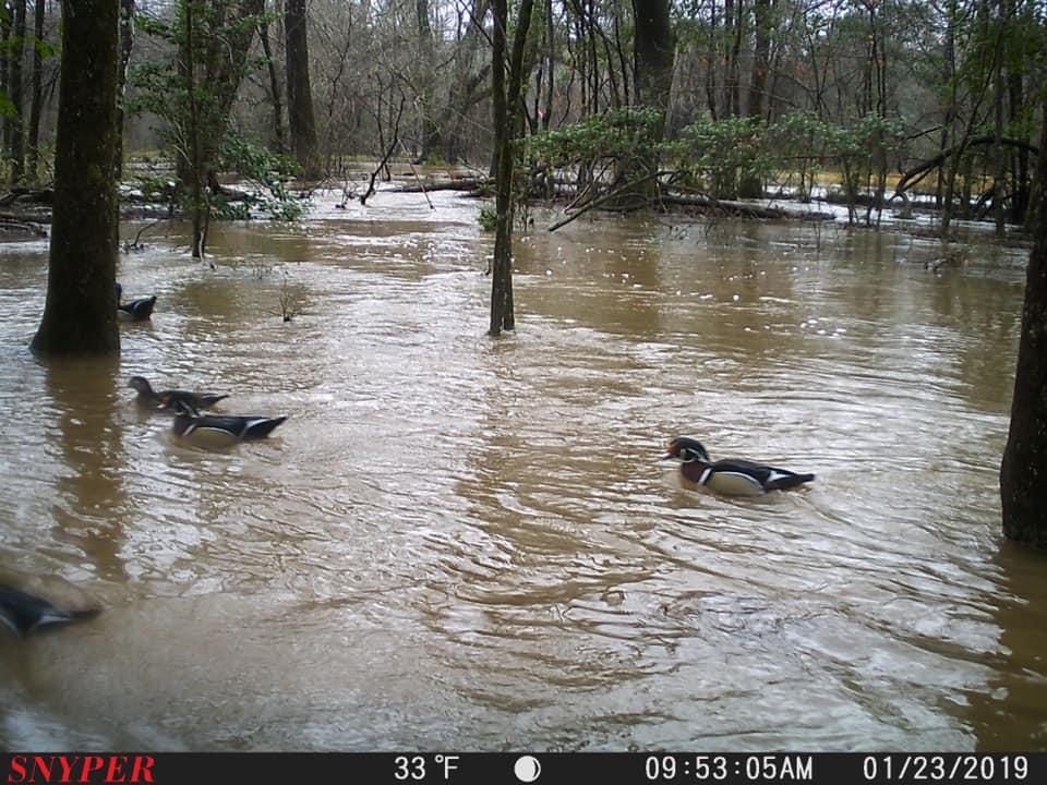 Trail Cam Tuesday