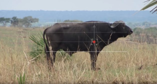 Craig Boddington Shares His Thoughts On Proper Cape Buffalo Shot Placement