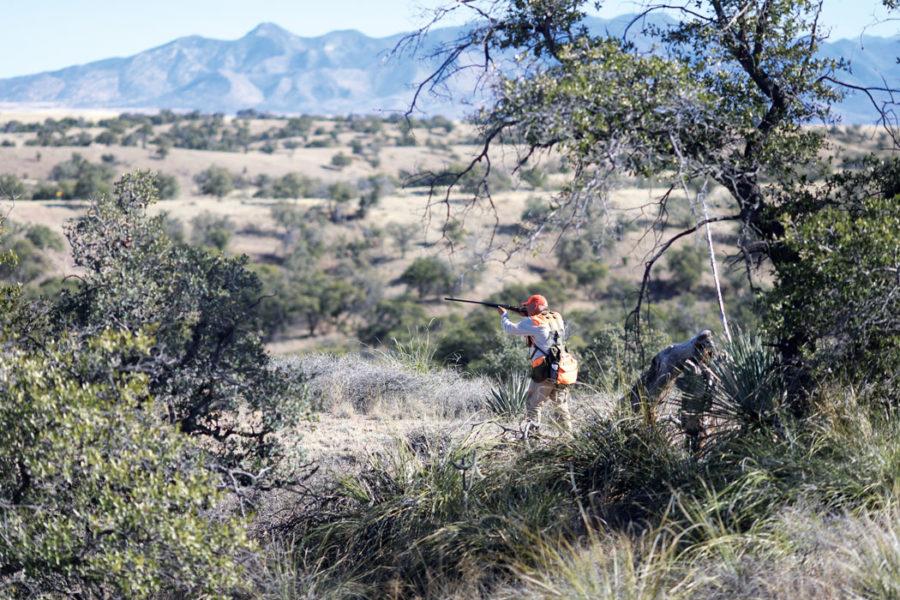Arizona's Babacomari Ranch, with its varied terrain and habitat, harbors a trio of wild quail: Gambel's