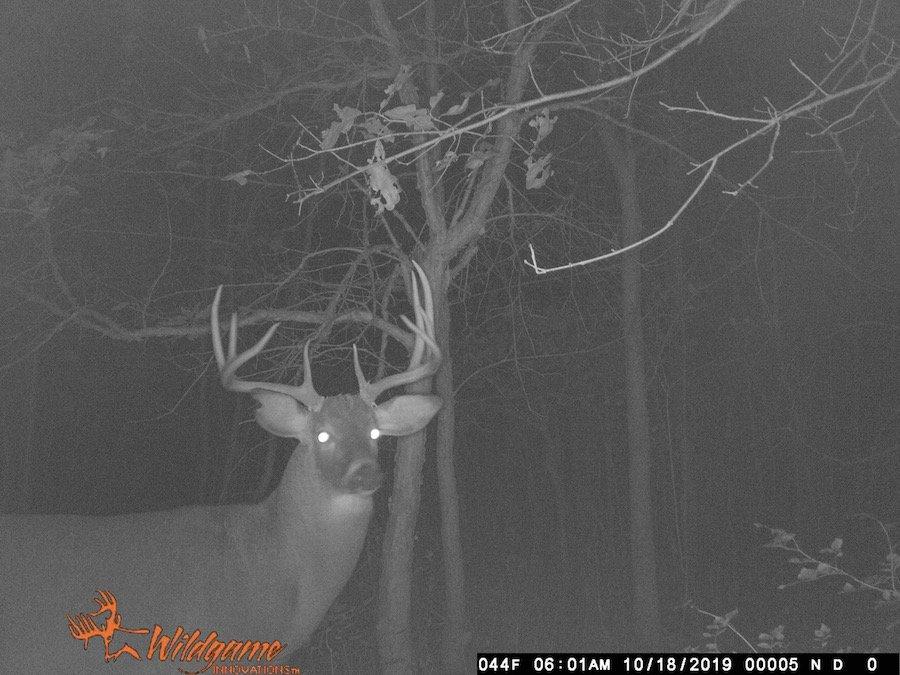 deer hunting times