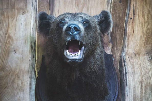 Famous Bear Hunters