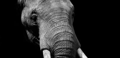 I was very lucky to be incredibly close to a small herd of these elephants and didn't even consider switching to a shorter reaching lens.  However, I really enjoyed the up close and personal portraits that I managed to get before the herd decided to move on.